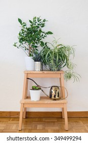 Houseplants and old brass watering can arranged on the wooden stool