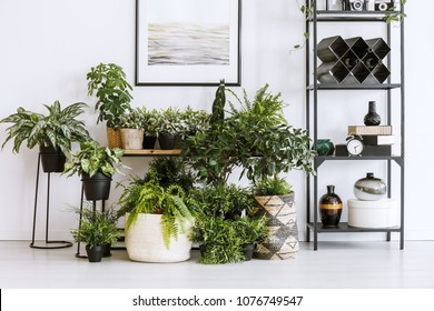 Houseplants on the floor and table standing next to a metal shelf with decorations in living room interior