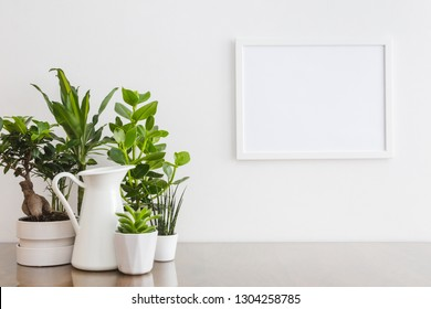 Houseplants in pots on table against white wall with photo frame mock up.