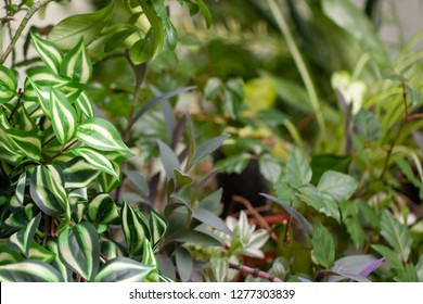 houseplants texture. different colors leaves and kinds of a plants. idea for decor and indoor ornament. selective focus