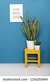 Houseplants in white ceramic pots on a wooden chair and a poster on the wall with the inscription (HOME SWEET HOME)