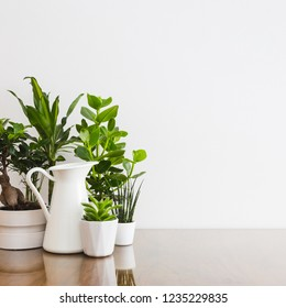 Houseplants in white flowerpots on wooden table against white wall - copy space.