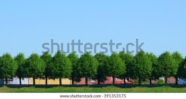 Houses behind trees in Slubice