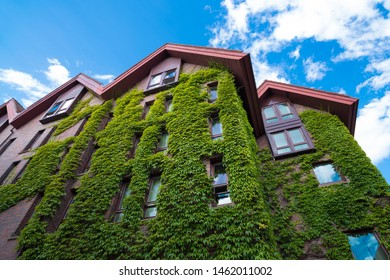 houses covered with natural green ivy