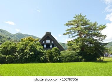 Houses in the Japanese Alps in Shirakawago, nature landscape of vegetation