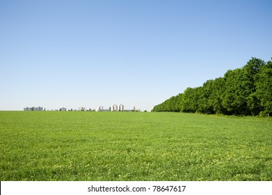 houses on the horizon in the field, in the afternoon. Clear blue sky and a small forest to the right of