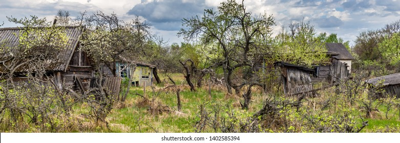 Houses overgrown with bushes and trees in an abandoned village in Chernobyl exclusion in Belarus