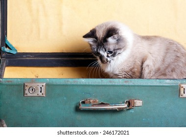 housewarming. playful young cat sitting in an old suitcase