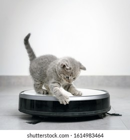 housework and smart technology concept , kitten play with robot vacuum cleaner at home