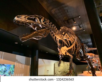Houston, USA - February 26th 2019: Acrocanthosaurus at The Houston museum of natural science, Houston