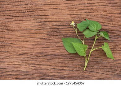 Houttuynia cordata or plu kaow branch green leaves and flower on an old wood background.