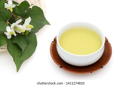 Houttuynia cordata tea, healthy dokudami drink, on white background