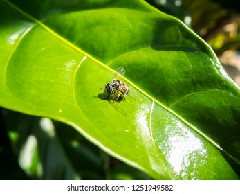 hoverfly and shadow on green leaf in nature garden