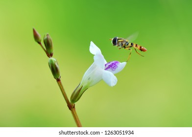 hoverfly,this photo is captured naturally