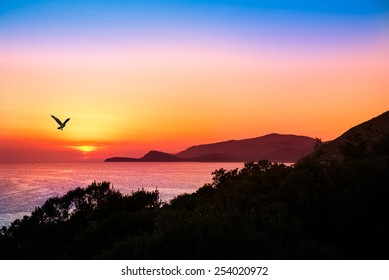 hovering raptor with a beautiful sunset over the ocean in the background