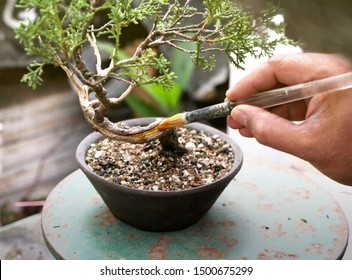 How to apply Lime Sulfur to preserve deadwood in Bonsai Tree. will be demonstrating the application on Bonsai tree, Making of bonsai trees Handmade bonsai tools.