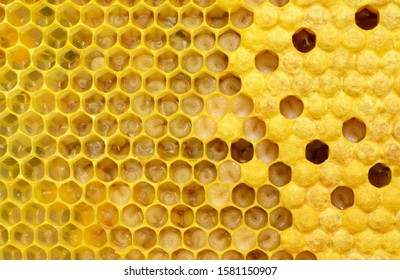 How bees multiply and are born. Stages of development of bee larvae. Bees Broods.