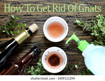 """""""How To Get Rid Of Gnats"""" with an inscription in English. get rid of the kitchen midge. recipe home traps. add wine or wine vinegar in a bowl and a few drops of soap. set instead of clusters."""