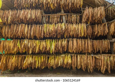 How to make tobacco leaves dry.