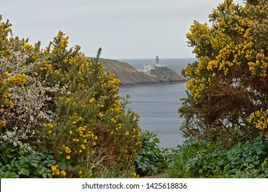 HOWTH, IRELAND, MARCH 30, 2019, Lighthouse in the fog on a cliff,framed by flowering gorse bushes . Howth, 30 March 2019