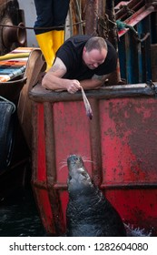 "Howth/Ireland - 08.11.2016.: A sailor man is feeding wild grey seals (Halichoerus grypus, meaning ""hooked-nosed sea pig"") in the famous harbour of Howth."