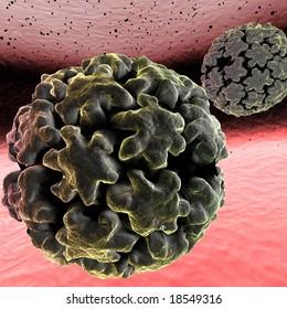 HPV Human Papilloma Virus