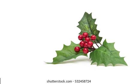 hristmas holiday holly decoration isolated on white background