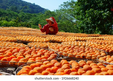 Hsinchu County, Taiwan-October 29, 2011: The harvested persimmons are dried in the building yard and made into persimmons