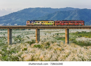 Hsinchu, Taiwan-September 20, 2016: Train Passing Through the Bridge with Autumn Silvergrass(Miscanthus) on the River Side at Neiwan Line