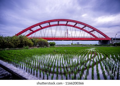 Hualien, Taiwan-August 14, 2018: Rural scenery with green paddy rice farm in Hualien, Taiwan, Asia.