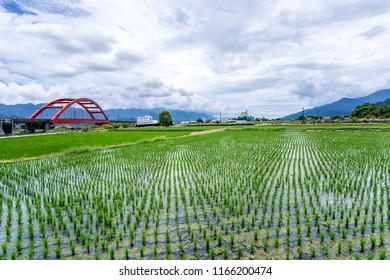 Hualien, Taiwan-August 14, 2018: A train across a m-type Red Bridge on the lush paddy fields, is Taiwan sight in East on August 14 2018 in Hualien, Taiwan