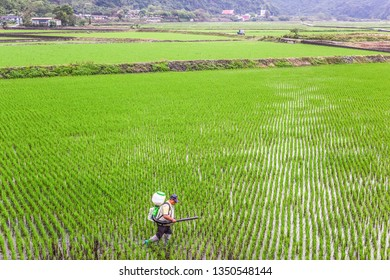 Hualien, Taiwan-March 26, 2016: Landscape Green View Of New Plowing Paddy (Organic Rice field) At Nanan