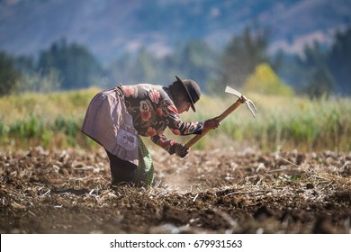 HUANCAYO, PERU - CIRCA 2017: A Unidentified woman work in a growing field circa 2017, in Huancayo, Peru.
