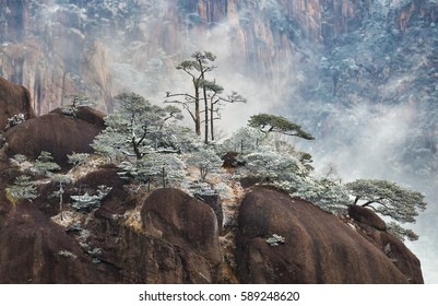 Huangshan Mountain ( Yellow Mountain ) pine trees