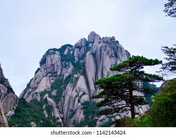 Huangshan (Yellow Mountain) and Huangshan Pine from Anhui province China. Huangshan is a UNESCO World Heritage Site and one of China's major tourist destinations.