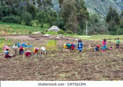 Huaraz, Peru - April 20, 2015: Peruvian people work on the farm in mountains