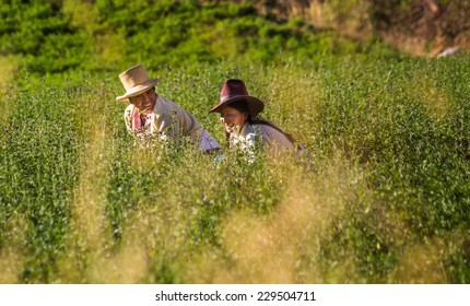 HUARAZ, PERU - CIRCA 2013: Two women work on the farm circa 2013 in Huaraz, Peru.