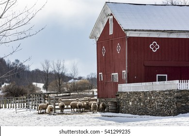 Hudson Valley Sheep and Barn in Winter Snow