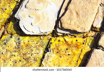 Hues of yellow on rocks at the beach