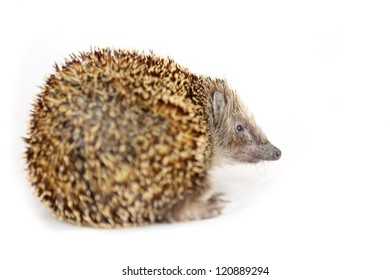 Huffy hedgehog turning his back on viewer