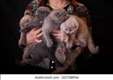 hug many cats