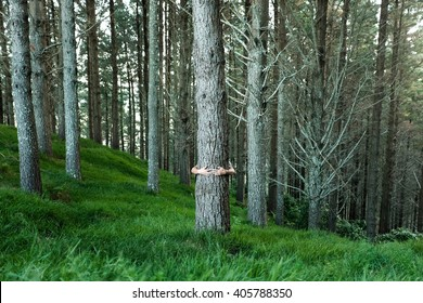 hug tree