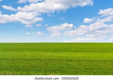 A huge beautiful field of winter rye extending beyond the horizon under a beautiful sky.