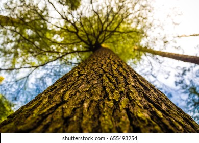 Huge beautiful tree in a valley called Khajjiar, Himachal pradesh, India. Green leaves creating a canopy with amazing serene blue skies. Texture background, wallpaper, nature picture. Near Dalhousie