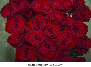 huge buds Scarlet times, beautiful bouquet of red roses