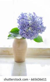 huge bue hydrangea in a vase against a window backlight