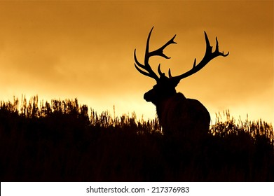 Huge Bull Elk Stag with trophy antlers in prairie habitat silhouette against colorful sunset sky Elk Hunting in the western United States of Wyoming, Colorado, Idaho, Montana, Utah, and Oregon