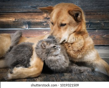 A huge dog and a cat. Animal relationships. Friendship cats and dogs