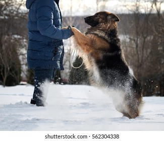 huge dog jumps on the owner. The snow flies. Dog plays, asks for affection