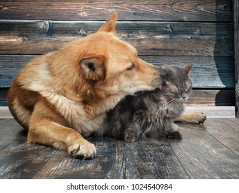 Royalty Free Dog Cat Sitting Licking Stock Images Photos Vectors Shutterstock